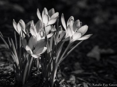 Spring. Finally.