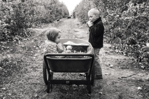 brother and sister eating apples in orchard
