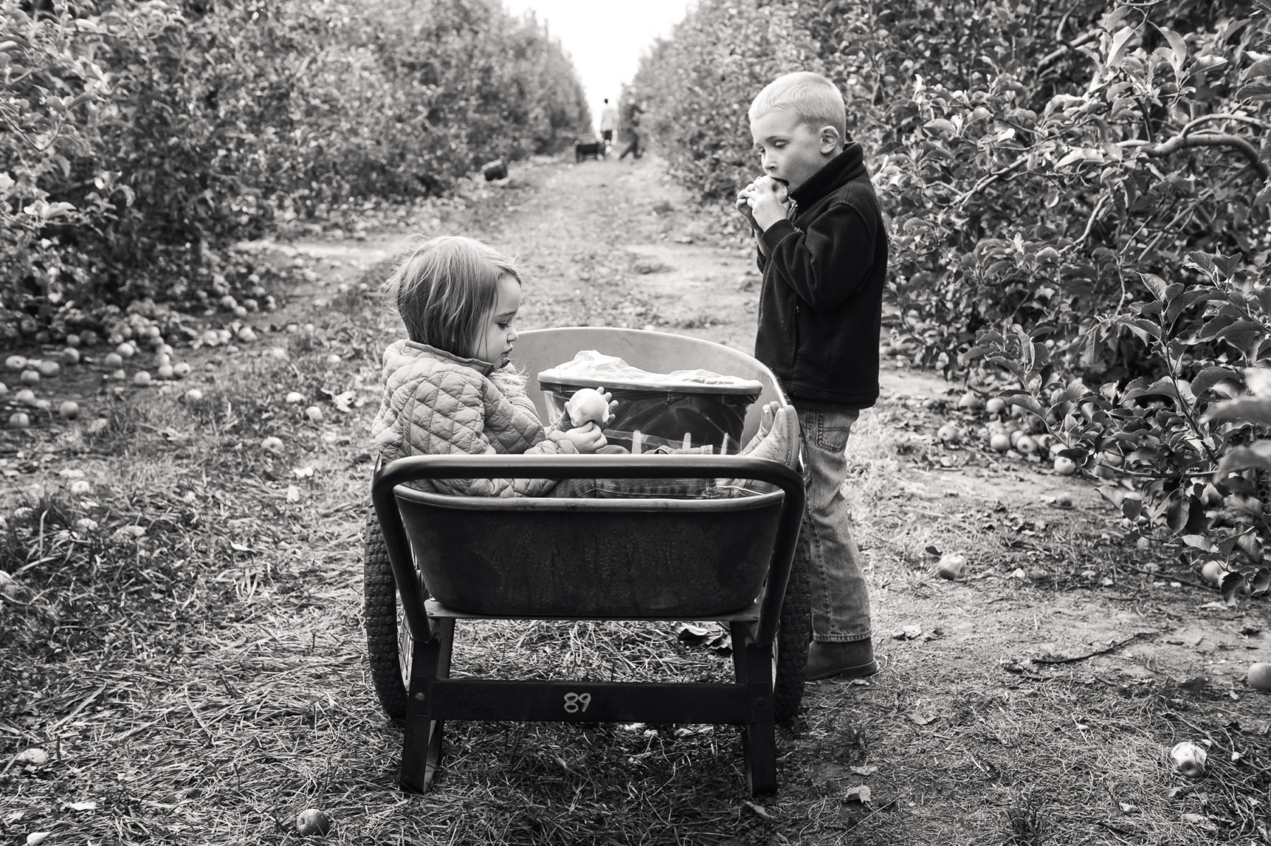 children eating apples in an orchard in wheelbarrow