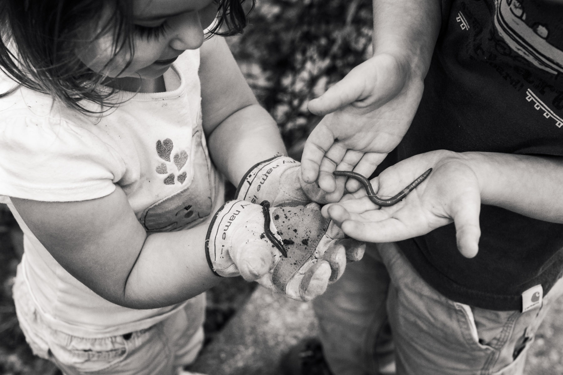 children holding worms on a summer day