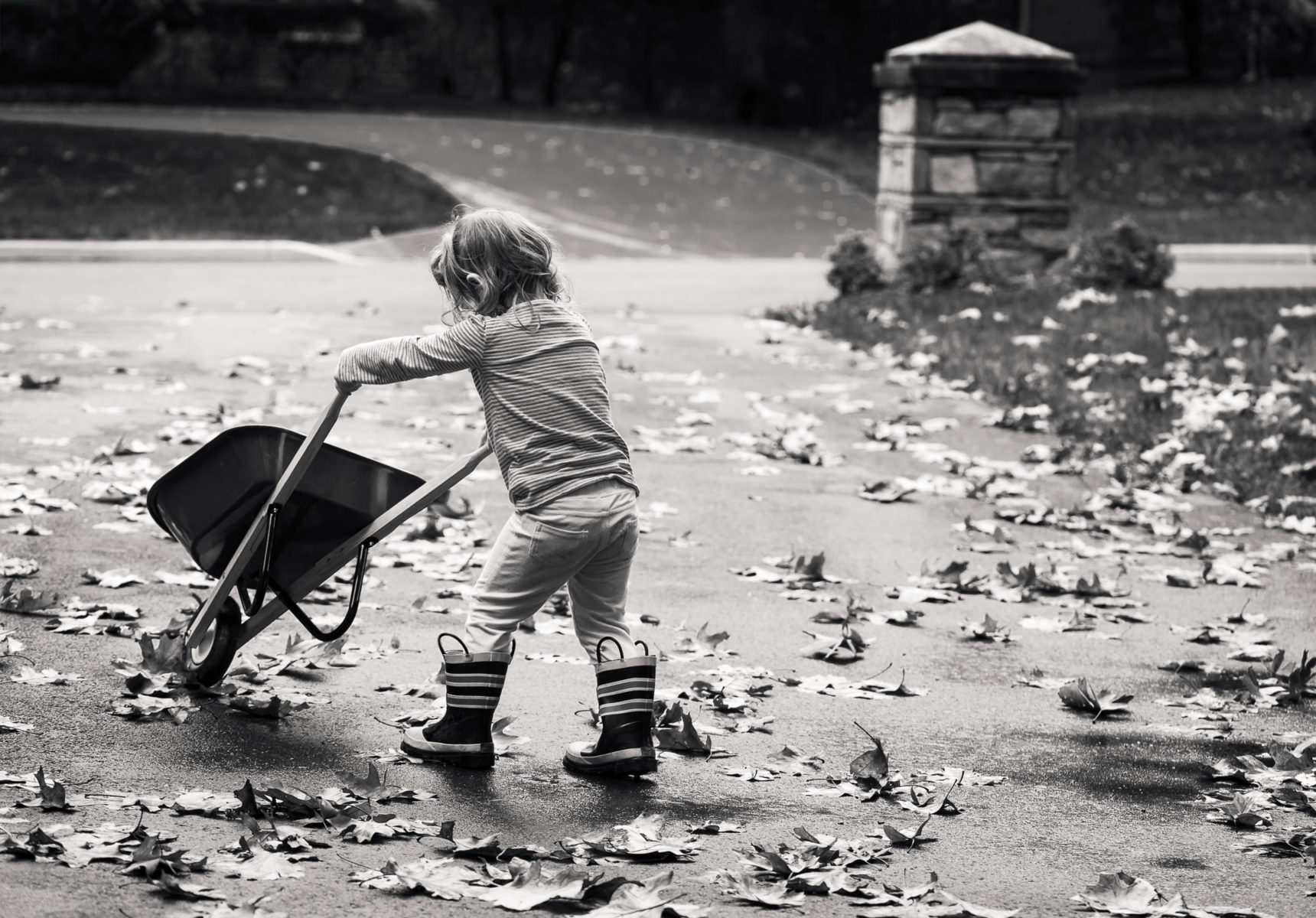 Girl pushing wheelbarrow through wet leaves