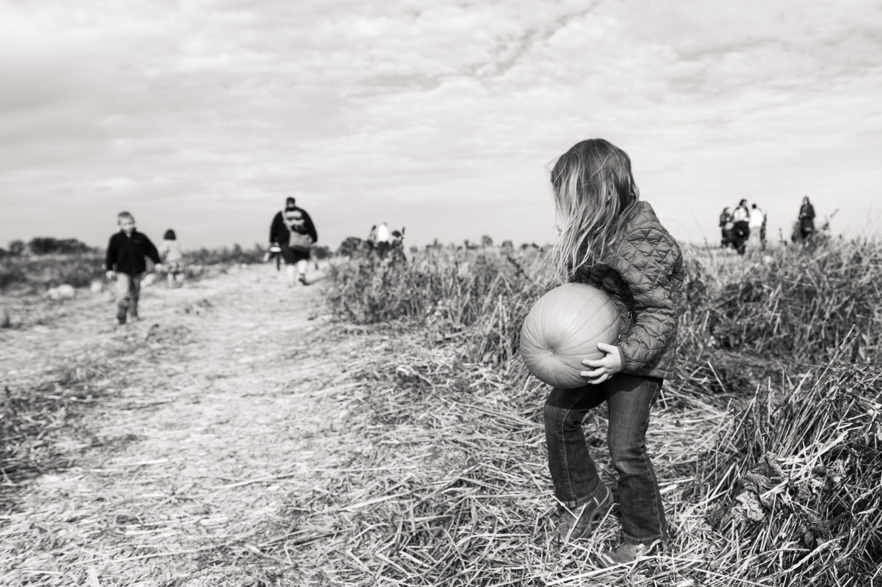 girl picking large pumpkin in field